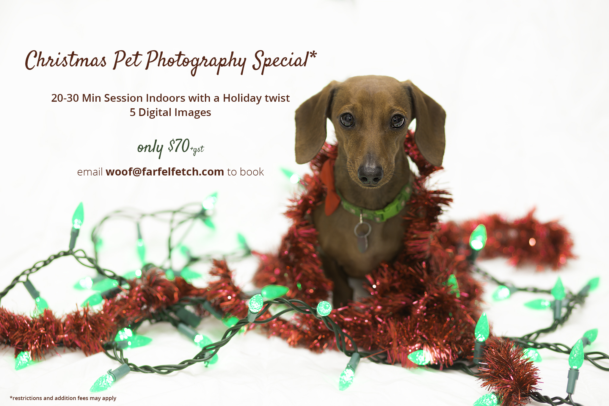 Farfel, Fetch! Pet Photography » » Christmas Pet Photos