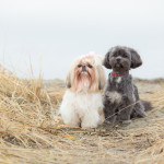 WhiteRock-Blackie-Spit-Dog-Photographer-3
