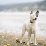 vancouver-dog-photographer-7